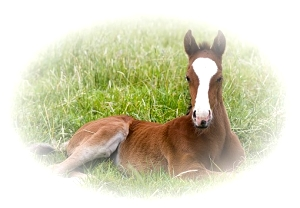 Horse breeding and training