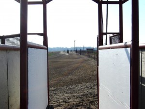 Elk Grove, CA Horse farm
