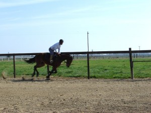 Horse boarding in elk grove, ca